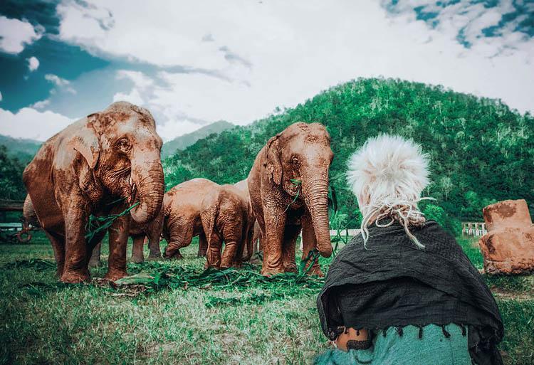 سفر داوطلبانه به تایلند برای نجات فیل های چیانگ مای