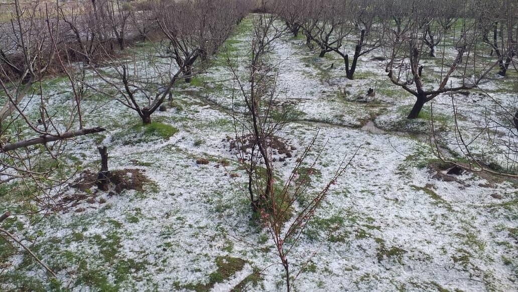 خبرنگاران بارش تگرگ به باغات و مزارع کشاورزی کرمانشاه خسارت زد