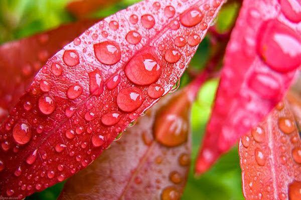 5 خرداد ، پیش بینی هوای بارانی برای بیشتر نقاط کشور
